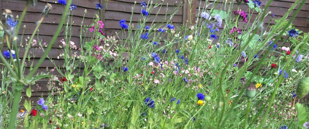 Natural Garden Flowers